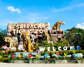 Tour du lịch Pattaya của Group Tours 2020/2021 195546