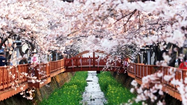 Trải nghiệm đáng nhớ khi du lịch Hàn Quốc một mình