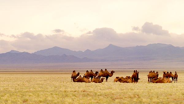 Trọn bộ kinh nghiệm du lịch Mông Cổ