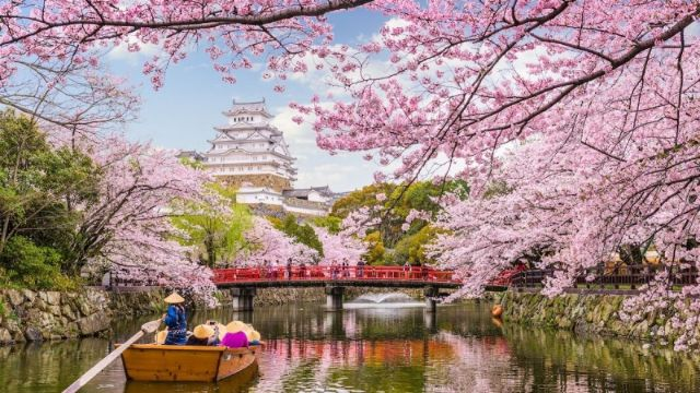 Khám phá vẻ đẹp của hoa anh đào ở Nhật Bản