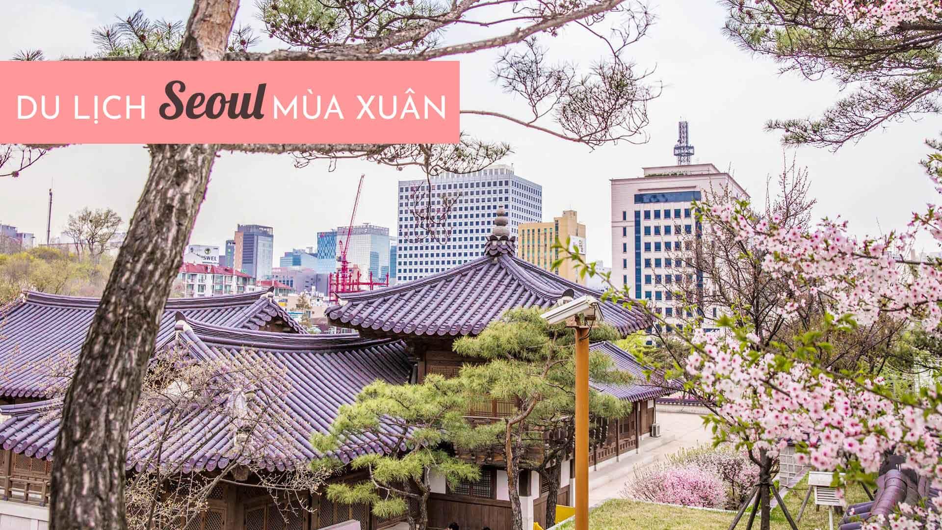 Du lịch Seoul mùa xuân - Ngắm hoa anh đào