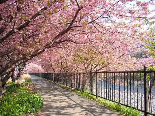 Ngắm nhìn con đường rợp bóng cây khi lựa chọn Tour du lịch Hàn Quốc